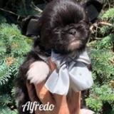 Alfredo5