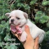 barbie13